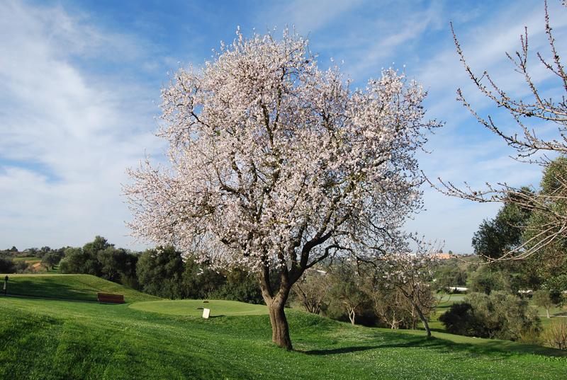 Pestana Vale da Pinta Golf Course-8192