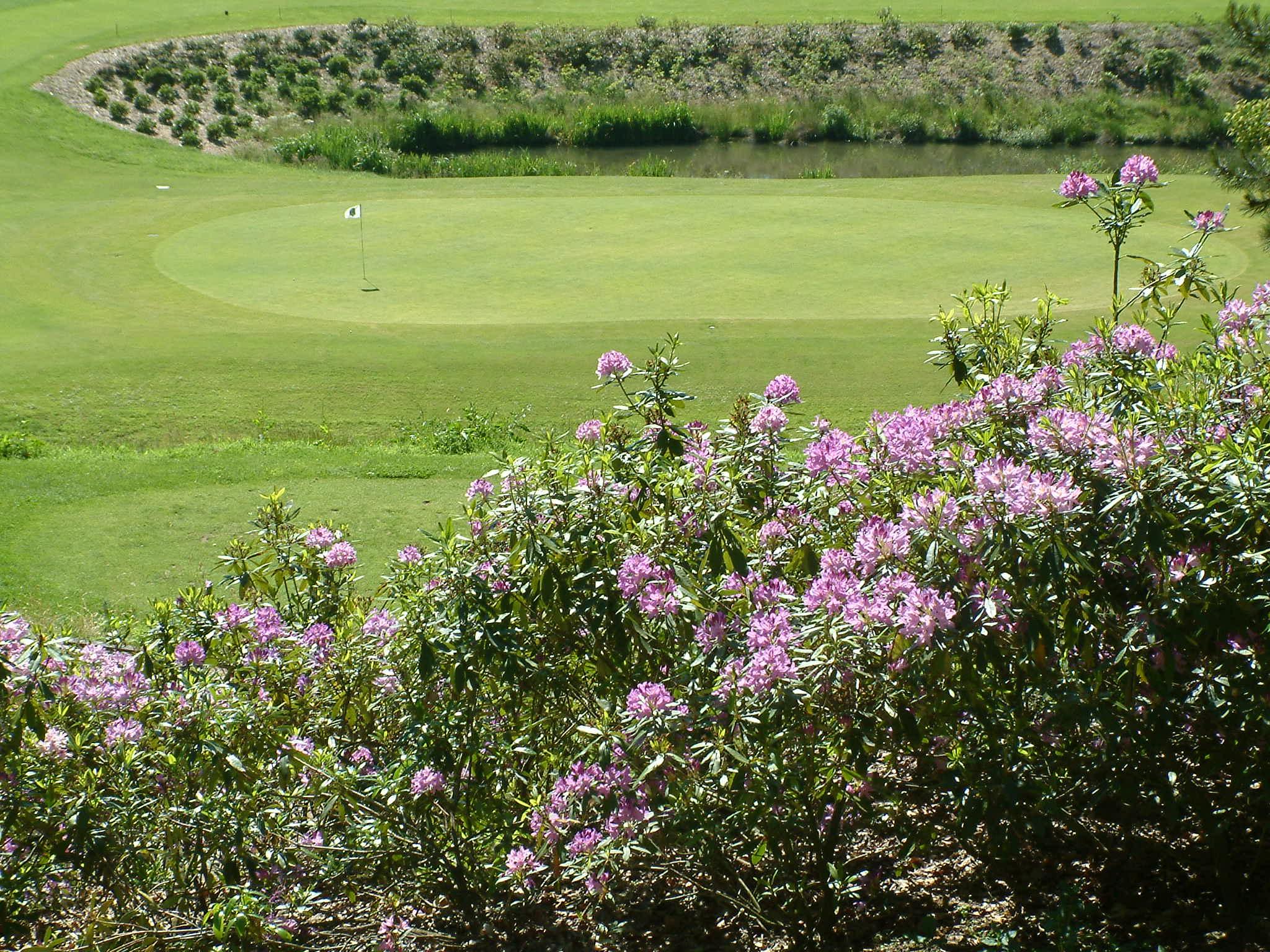 Bercuit Golf Course-15661
