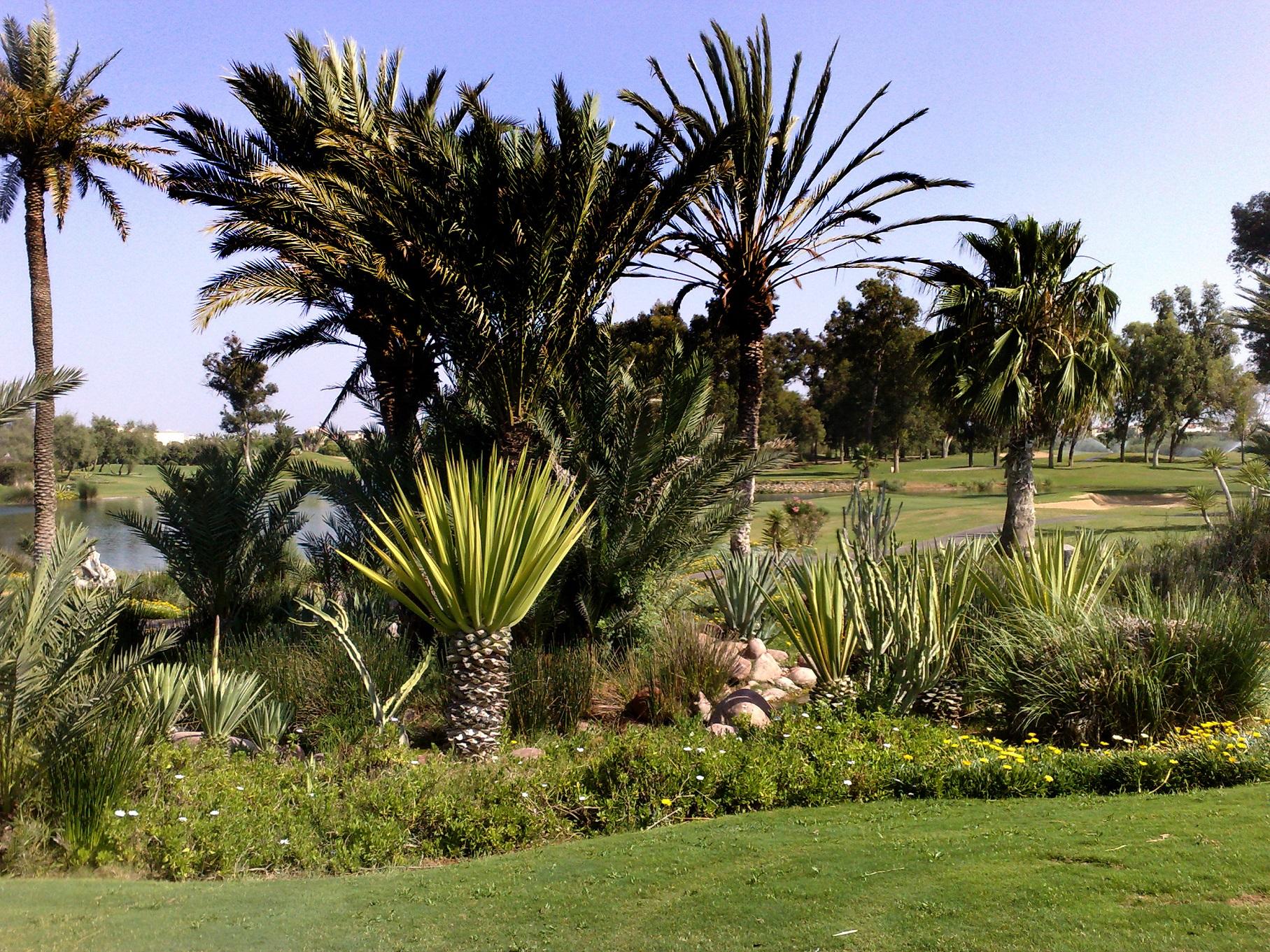 Tikida Golf Palace *****-11980