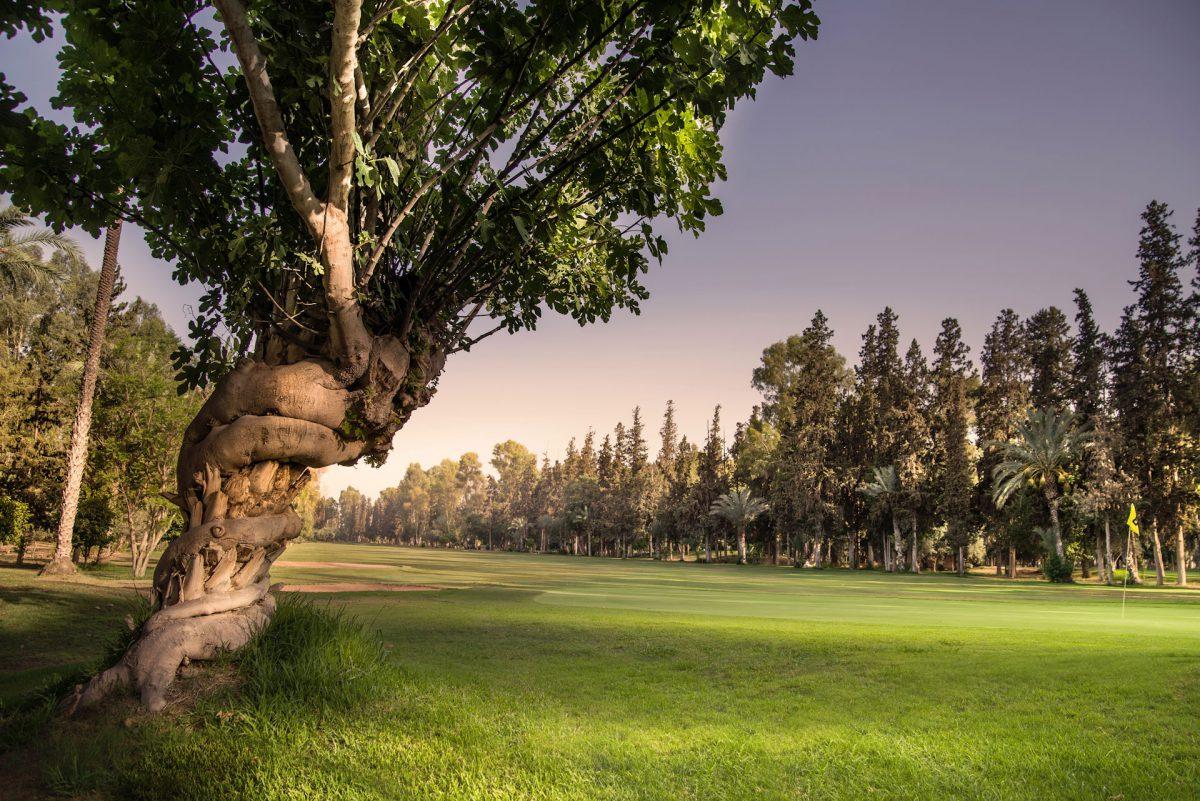 Royal Golf de Marrakech Golf Course-16095
