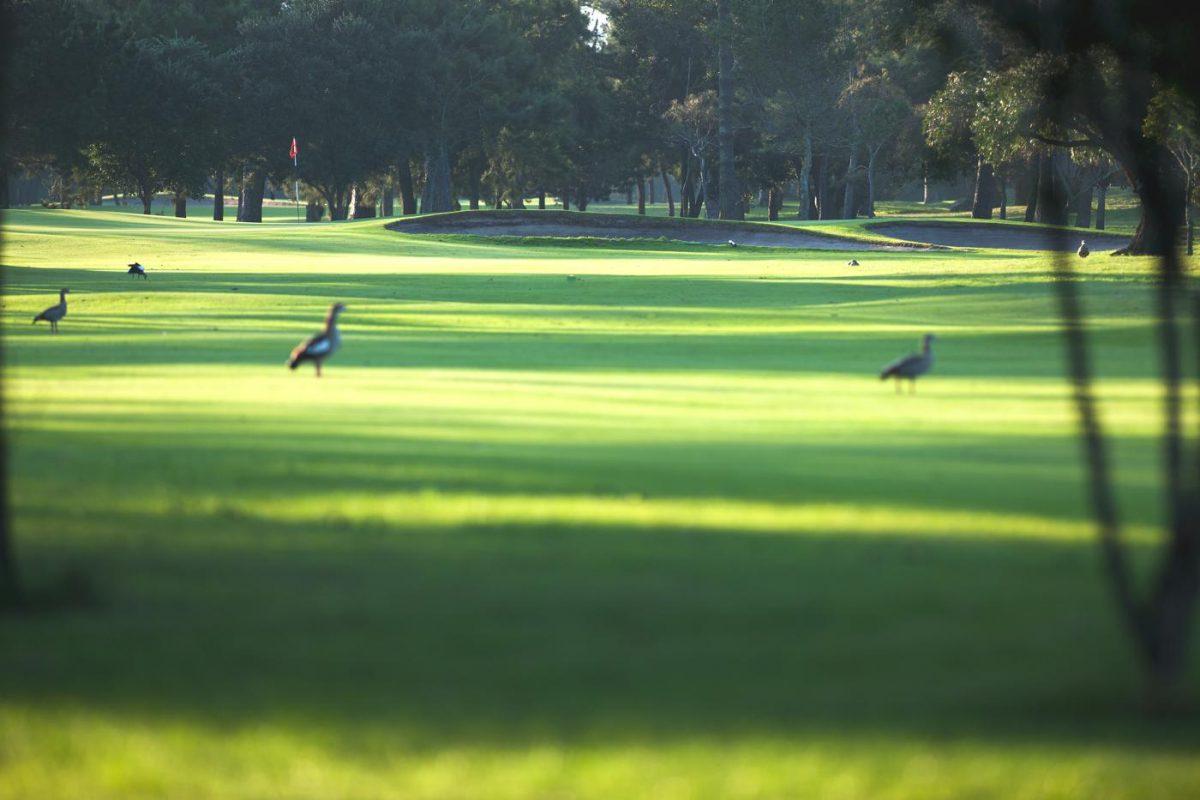 Royal Cape Golf Club-16623