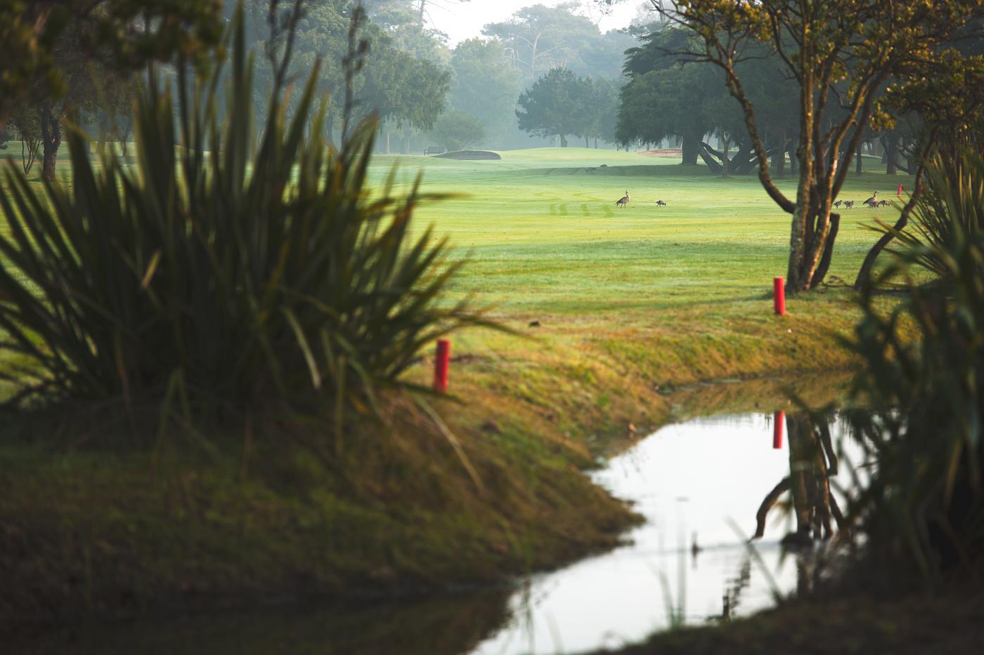 Royal Cape Golf Club-16628