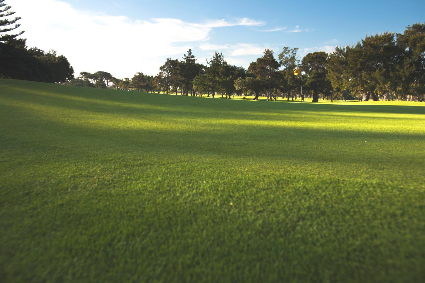 Royal Cape Golf Club-16630