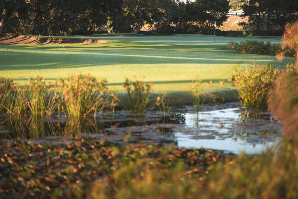 Royal Cape Golf Club-16634
